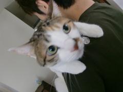 福野さんちのネコ