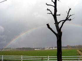 美しい虹。久しぶりにみました。