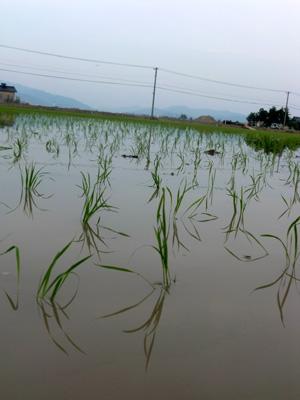 田植えが終わった後の田園風景