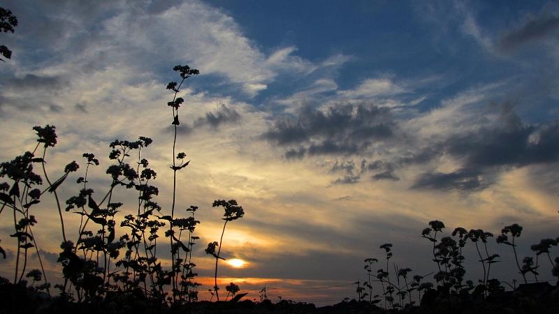 低いアングルから撮ったソバの花