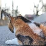 猫に小判 – 悪いのはあげた方?
